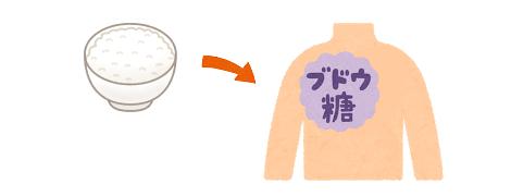 ご飯がブドウ糖に変わるイメージ