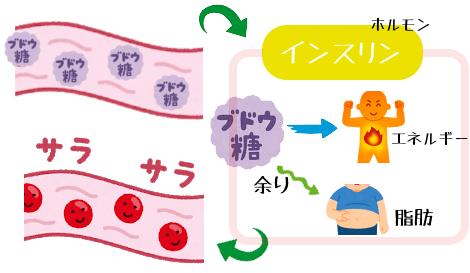 糖が脂肪に変わる図解